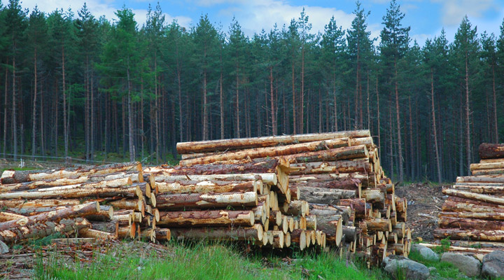 forest logging